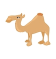 Camel icon in cartoon style vector image