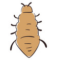 flat lice on white background vector image