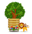 lion in front of an empty wooden signboard vector image vector image