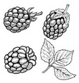 set of hand drawn raspberries isolated on white vector image vector image
