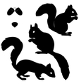 Set of squirrels silhouettes vector image vector image
