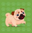pug dog happy cartoon sitting over footprints vector image