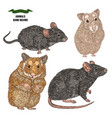 hand drawn rat mouse and hamsters colored sketch vector image