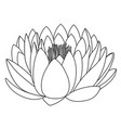 outlined lotus pattern flower vector image