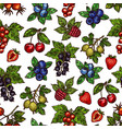 seamless pattern of berries with leaves sketches vector image vector image