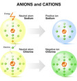 Anions and cations vector image vector image