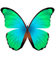 beautiful butterfly isolated on a white vector image vector image