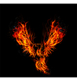 Fire burning Phoenix Bird with black background vector image