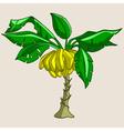 cartoon banana tree with bananas vector image vector image