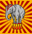 circus elephant on pedestal pop art style vector image vector image