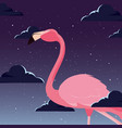cute flamingo bird night backrgound vector image