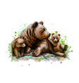 brown mother bear with her cubs from a splash of vector image vector image