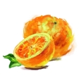 drawing orange with a slice vector image vector image