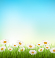 Green grass lawn with white chamomiles on sky vector image vector image
