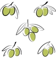 Stylized olives isolated on a white background vector image vector image