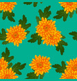 yellow chrysanthemum on green teal background vector image vector image