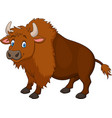 cartoon happy bison vector image vector image