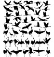 cranes silhouette vector image vector image