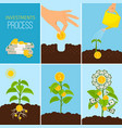 investments process and financial business growth vector image