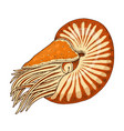 sea creature nautilus pompilius shellfish or vector image