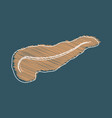 stylization of hand drawing isolated of pancreas vector image