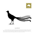 black silhouette of lyrebird animals of australia vector image
