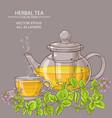 cup of oregano tea in teapot vector image vector image