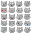 Cute grey cat emoticons vector image