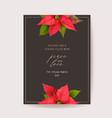 poinsettia winter floral card christmas vector image