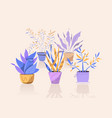 potting trees flowerpots hanging plants in pots vector image vector image