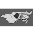 skull cow vector image vector image