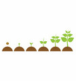 evolution young plant vector image vector image