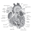 Heart greyscale vector image vector image