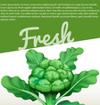 Infographic design with fresh broccoli vector image vector image