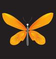 Orange bird wings Butterfly vector image vector image