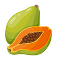 papaya fruit icon tasty fresh tropical dessert vector image vector image