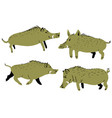 set with cute boars with wild pigs vector image vector image