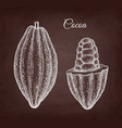 chalk sketch of cocoa vector image vector image