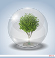 tree in a glass bowl vector image vector image