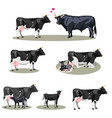 cow life with all stages including birth vector image vector image