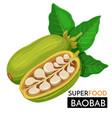 baobab icon vector image vector image