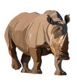 big african rhino wlking isolated vector image