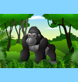 cartoon gorilla in the thick rain forest vector image