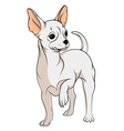 drawing a chihuahua isolated objects vector image vector image