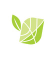 leaf logo design template isolated vector image vector image
