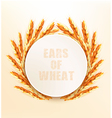 Ears of wheat vector image