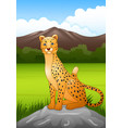 cartoon cheetah sitting on a rock in african savan vector image