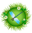 dragonfly sitting on a meadow vector image vector image