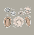 shell hand draw sketch seafood set vector image vector image