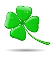 Four leaf clover isolated on white for St Patrick vector image